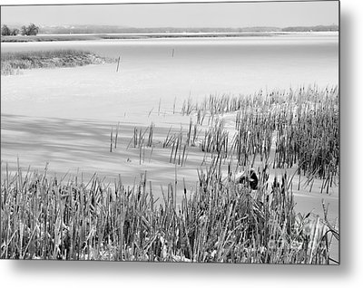 Frozen Lake And Ice Coated Bullrushes Metal Print by Louise Heusinkveld