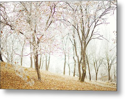 Frozen Spring Metal Print by Silvia Floarea Toth