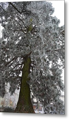 Metal Print featuring the photograph Frozen Tree 2 by Felicia Tica