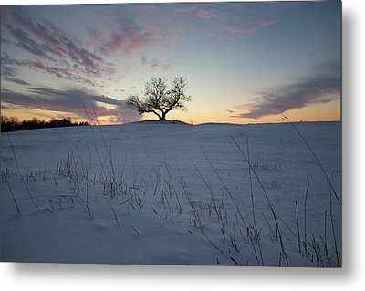 Frozen Tree Of Wisdom Metal Print by Aaron J Groen