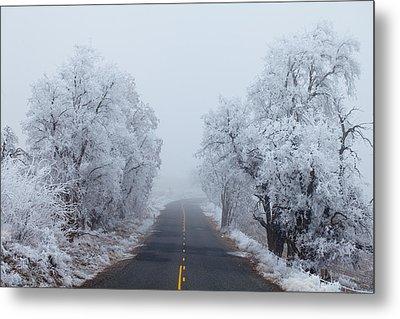 Frozen Trees Metal Print by Darren  White