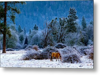Metal Print featuring the photograph Frozen Turf by Julia Hassett