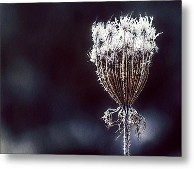 Metal Print featuring the photograph Frozen Wisps by Melanie Lankford Photography