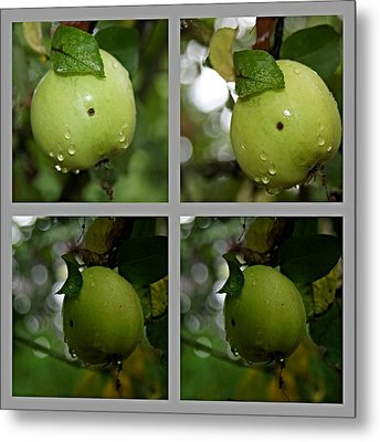Frucht  Metal Print by Klaas Hartz