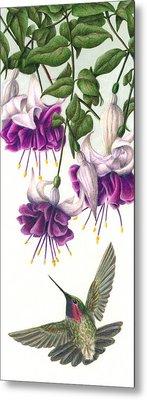Fuchsia Beauty Metal Print by Pat Erickson