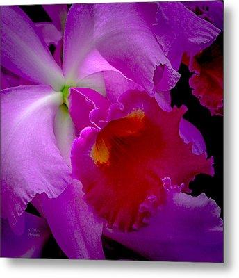 Fuchsia Cattleya Orchid Squared Metal Print