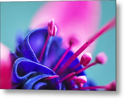 Fuchsia Detail Metal Print by Arkady Kunysz