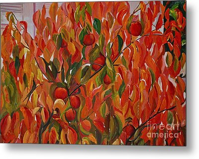 Fuyu Persimmon Tree Metal Print