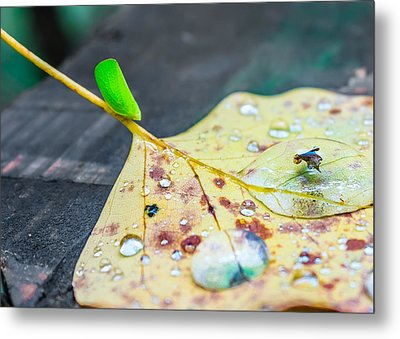 Metal Print featuring the photograph Fulgoroidea On A Leaf by Rob Sellers