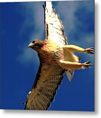 Full Flight Metal Print by Rebecca Adams