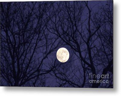 Full Moon Bare Branches Metal Print by Thomas R Fletcher