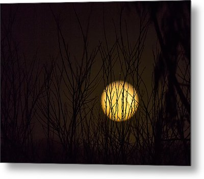 Full Moon Behind The Trees Metal Print by Angela A Stanton