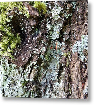 Metal Print featuring the photograph Fungus Bark by Laurie Tsemak