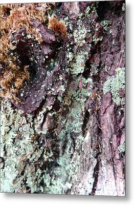 Metal Print featuring the photograph Fungus Bark Purple by Laurie Tsemak