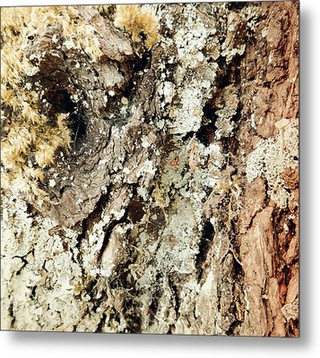 Metal Print featuring the photograph Fungus Bark Vintage by Laurie Tsemak