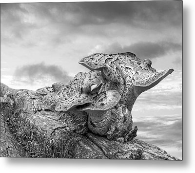Funky Fungi Black And White Metal Print by Gill Billington