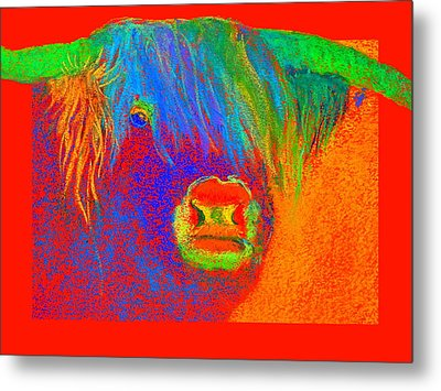 Funky Scottish Highland Cow Wildlife Art Prints Metal Print