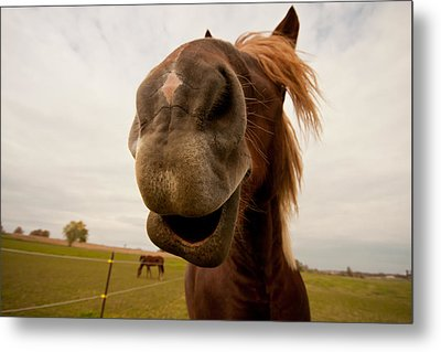Funny Horse Metal Print by Paulina Szajek