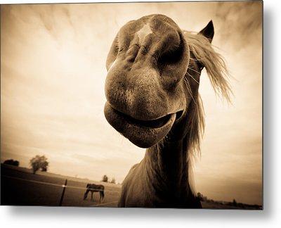 Funny Horse Sepia Metal Print by Paulina Szajek