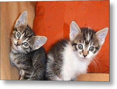 Funny Kittens Metal Print