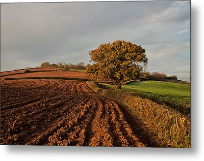 Furrows And Field Metal Print by Pete Hemington