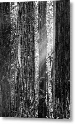 Future Giants Monochrome Metal Print by Mark Alder