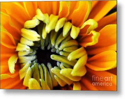 Metal Print featuring the photograph Fuzzy Wuzzy by Judy Wolinsky
