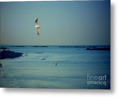 Metal Print featuring the photograph Gabbiani - Seagulls by Ze  Di