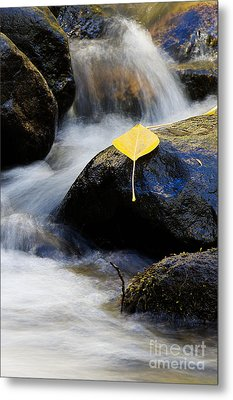Metal Print featuring the photograph Galena Creek Trail  by Vinnie Oakes