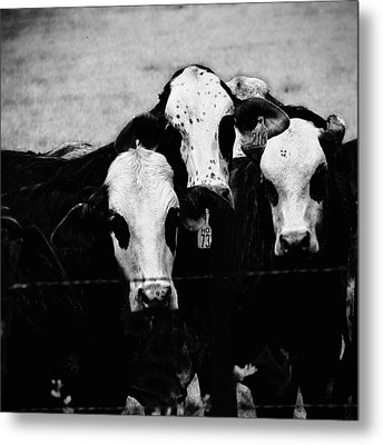 Gangland 1 Metal Print by Wendy J St Christopher