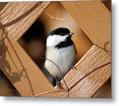 Garden Chickadee Metal Print by Christina Rollo