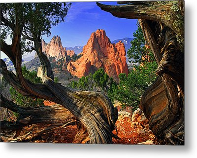 Garden Framed By Twisted Juniper Trees Metal Print by John Hoffman