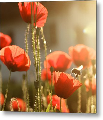 Garden Glow Metal Print by Colleen Williams