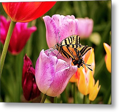 Garden Party Metal Print by Rona Black