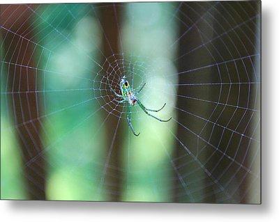Garden Spider Metal Print by Candice Trimble
