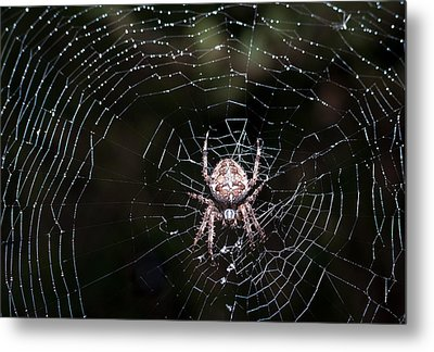 Metal Print featuring the photograph Garden Spider by Matt Malloy