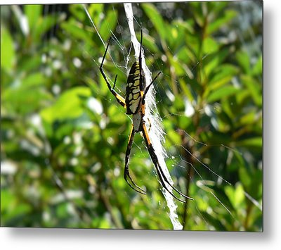 Metal Print featuring the photograph Garden Spider On Web by MM Anderson