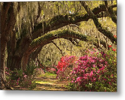 Metal Print featuring the photograph Garden View by Patricia Schaefer
