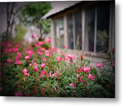 Gardens Of Pink Metal Print by Linda Unger