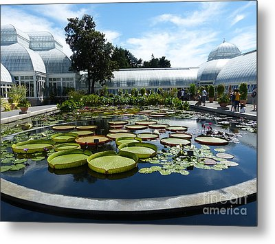 Pond Of Lilies Metal Print by Marguerita Tan