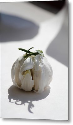 Garlic Clove Metal Print