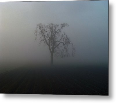 Metal Print featuring the photograph Garry Oak In Fog by Cheryl Hoyle
