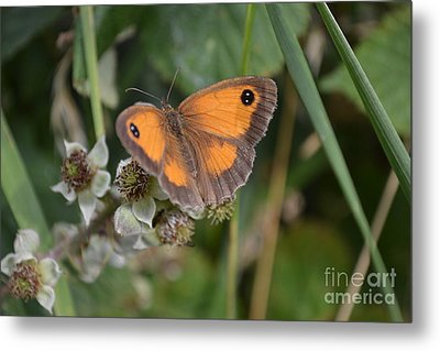 Gatekeeper Butteryfly Metal Print by Scott Lyons