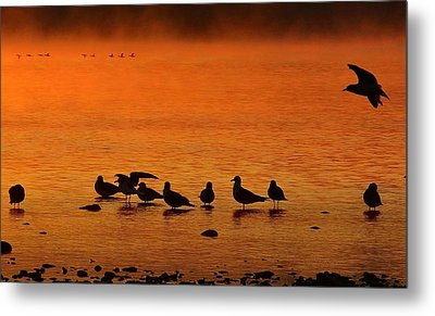 Gathering At Sunrise Metal Print