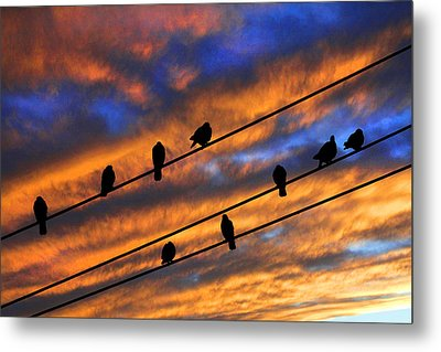 Metal Print featuring the photograph Gathering by Mike Flynn