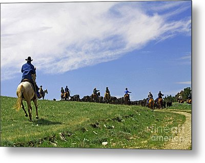 Gathering The Herd. Metal Print