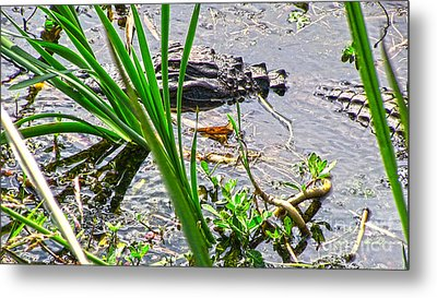 Gator Baby Metal Print by D Wallace