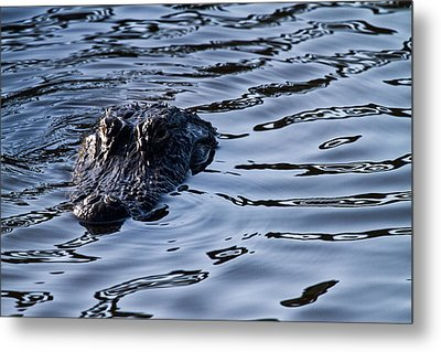 Gator On The Hunt Metal Print by Andres Leon