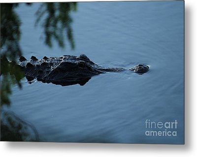 Gator On The Prowl Metal Print by Theresa Willingham