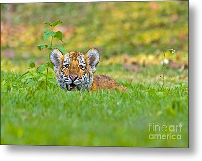 Gauging The Distance Metal Print by Ashley Vincent
